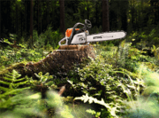 Stihl MS 362 CM Chainsaw